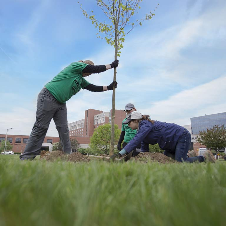 SPEA students plant a tree on Arbor Day.